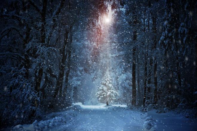 Verschneiter Winterwald mit geschmücktem Baum im Licht.